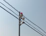駐車場での車上荒らし|防犯カメラの日本防犯設備