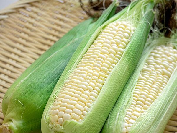 【山梨県】収穫期を迎えたトウモロコシが大量盗難被害に