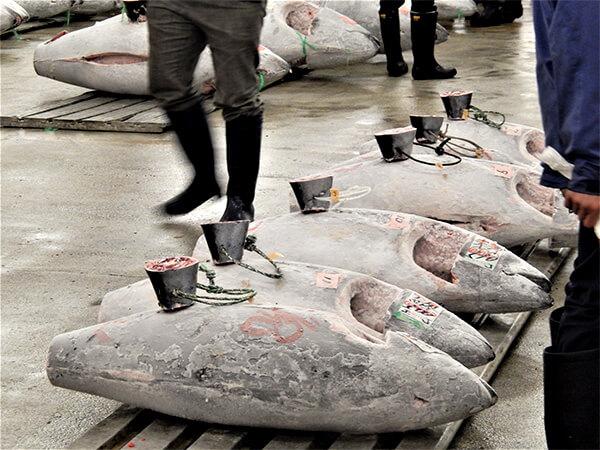 【静岡県】冷凍カツオ4トン窃盗で男4人逮捕
